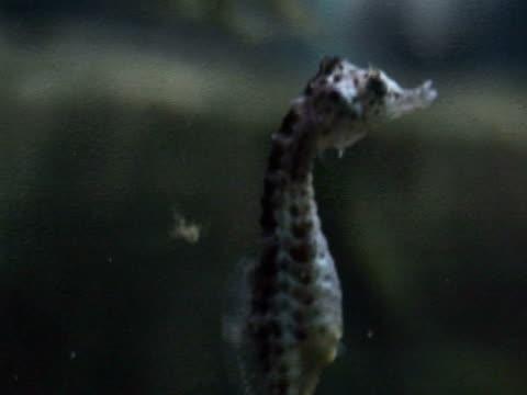vídeos de stock e filmes b-roll de seahorse relaxation - scarborough reino unido