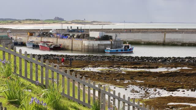 seahouses harbor with bamburgh castle in the background on july 19, 2021 northumberland, uk. - aquatic organism stock videos & royalty-free footage