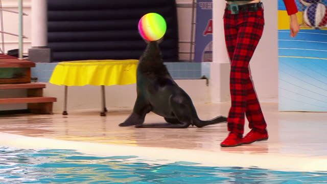 seal and ball - seals stock videos and b-roll footage