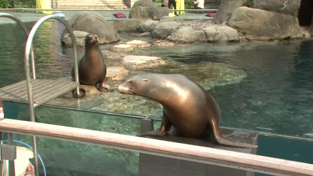 seal at the the wildlife conservation society safari! india gala at new york ny. - wildlife conservation stock videos & royalty-free footage