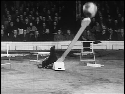b/w 1955 seal jumping on see-saw + catching ball on nose in circus / audience in background - yorkville illinois stock videos & royalty-free footage