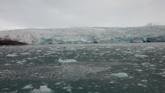 a seal resting on a small iceberg among sea-ice in front of nordenskiöldbreen glacier, spitsbergen - スヴァールバル諸島点の映像素材/bロール