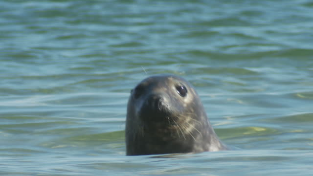 a seal swims past other seals, then dives. - seals stock videos and b-roll footage