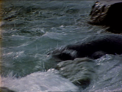 a seal vocalizes as it swims through waves to the shore. - wassersäugetier stock-videos und b-roll-filmmaterial