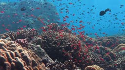 Sealife in a Coral Reef