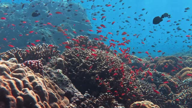 sealife in a coral reef - reef stock videos & royalty-free footage