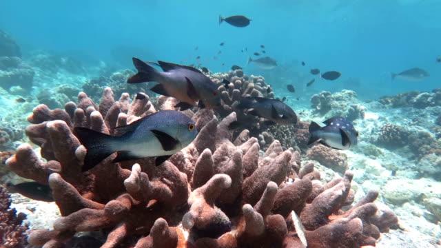 Sealife in Sipadan, Malaysia