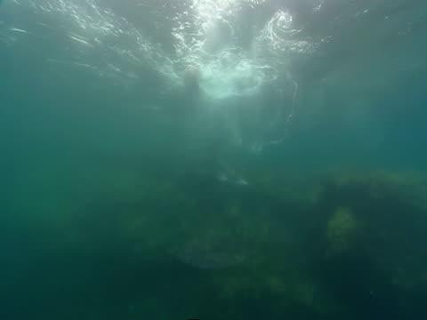 vídeos de stock, filmes e b-roll de sealions dart to and fro over a coral reef. - mamífero aquático