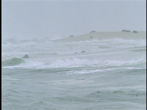 seals bob in the ocean as waves roll toward the beach. - atlantikinseln stock-videos und b-roll-filmmaterial