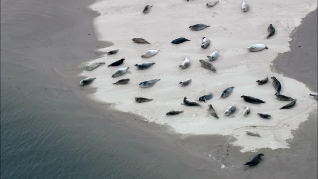vídeos de stock, filmes e b-roll de focas em holkham bay-vista aérea-inglaterra, norfolk, reino unido - norfolk east anglia