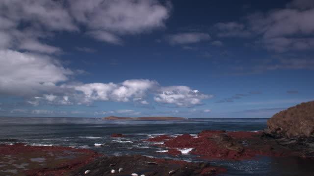 tl seals lie on rocky coast, falkland islands - medium group of animals stock videos & royalty-free footage