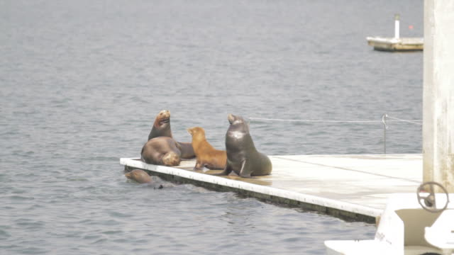 Seals on a barge