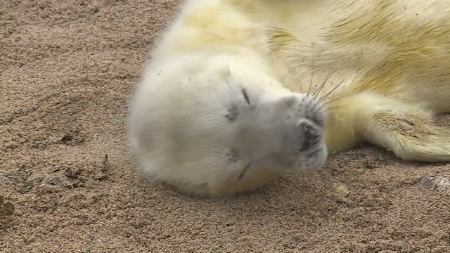 seals on a beach - seal animal stock videos & royalty-free footage