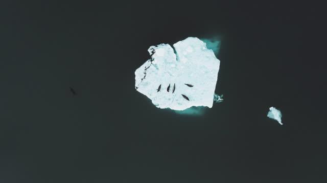 stockvideo's en b-roll-footage met zeehonden op een blok ijs - zeehond