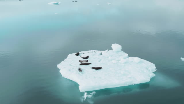 seals on a block of ice - seal animal stock videos & royalty-free footage