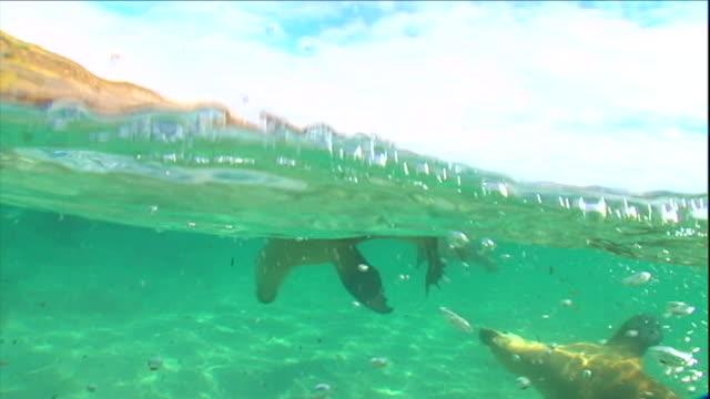 seals play in shallow water. - アザラシ点の映像素材/bロール