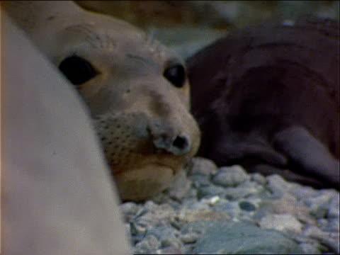 seals rest on a rocky shore. - wassersäugetier stock-videos und b-roll-filmmaterial