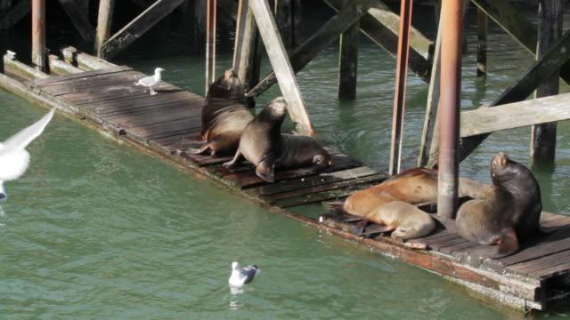Seals resting on dock