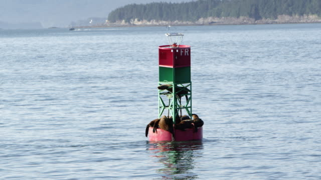 seals sleeping on buoy in the ocean while slowly passing by - buoy stock videos and b-roll footage