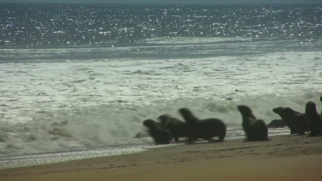 seals - strand_seeloewen - sea lion stock videos & royalty-free footage