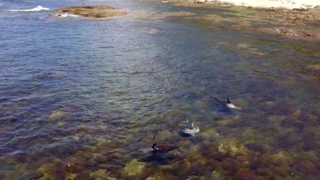 seals sunbathing in shallow water - animal fin stock videos and b-roll footage