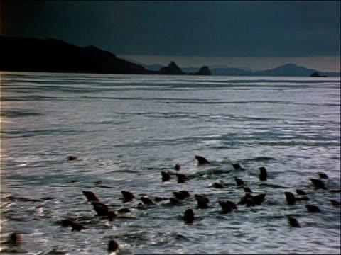 seals swim in the ocean near a rocky shore. - wassersäugetier stock-videos und b-roll-filmmaterial