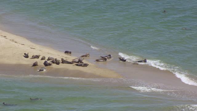 MS HA POV Seals swimming in sea near Muskeget Island / Nantucket, Massachusetts, United States
