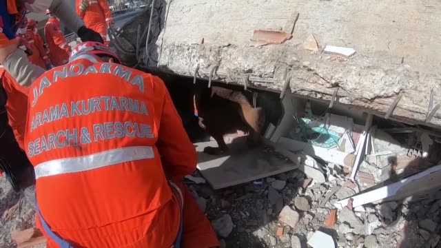 search and rescue dogs are helping their human colleagues in turkey's western izmir province to find the missing victims of the earthquake, dead or... - türkei stock-videos und b-roll-filmmaterial