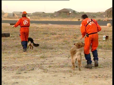 stockvideo's en b-roll-footage met search and rescue teams with sniffer dogs arrive from switzerland to look for victims of the gujarat earthquake. - werkdier
