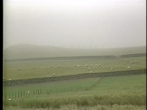 search efforts continue for victims of the lockerbie pan am crash while sheep graze in green pastures. - pasture stock videos & royalty-free footage