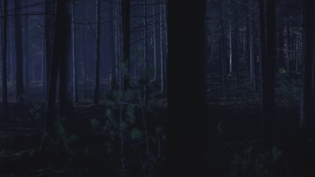 search lights flash over a forest at night. - spooky stock videos & royalty-free footage