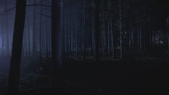 Search lights flashing over a foggy forest at night.