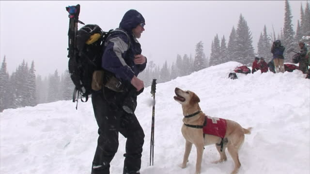 a search-and-rescue dog waits patiently as a skier pulls a toy from his pocket and they play tug-of-war with it in the snow. - winter sport stock videos & royalty-free footage