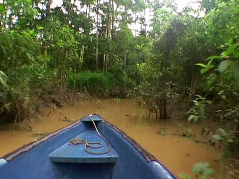 searching for wildlife - backwater stock videos & royalty-free footage