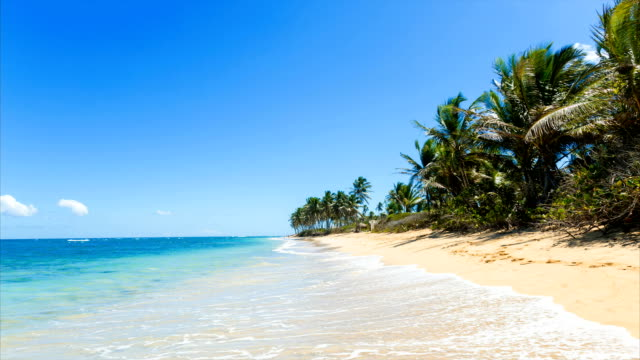 seascape and palm trees - caribbean sea stock videos & royalty-free footage
