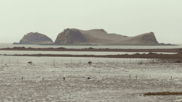 Seascape at low tide in Ongjin-gun (Natural habitat for endangered birds), Incheon