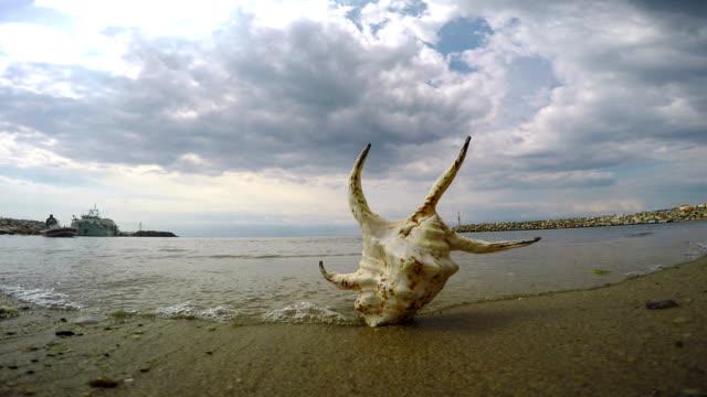 seashell. fast motion - seashell stock videos & royalty-free footage