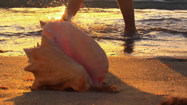 ms, seashell on beach at sunset, person wading in wave in background, low section, florida, usa - seashell stock videos & royalty-free footage