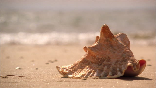 Seashell on beach, ocean in background