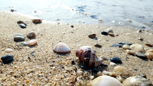 seashell on sea shore - animal shell stock videos & royalty-free footage