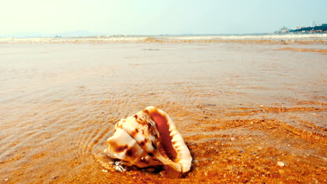 seashell on the sand beach - seashell stock videos & royalty-free footage
