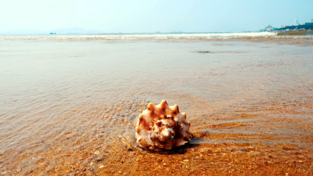 seashell on the sand beach - receding tide stock videos & royalty-free footage
