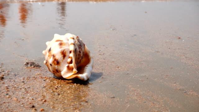 seashell on the sand beach - seashell stock videos & royalty-free footage