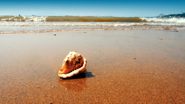 seashell on the sand beach - idyllic stock videos & royalty-free footage