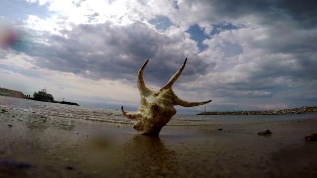 seashell. slow motion - seashell stock videos & royalty-free footage
