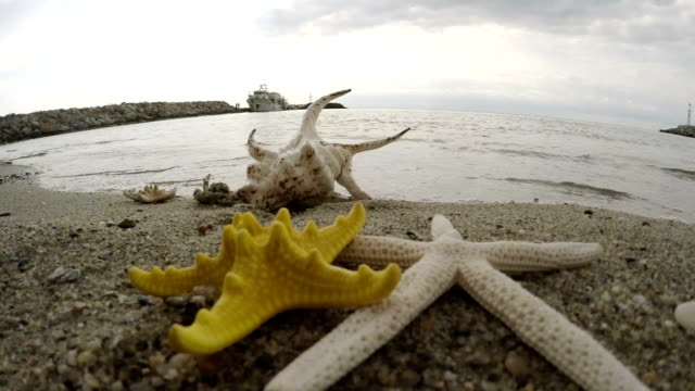 seashell. starfish. slow motion - seashell stock videos & royalty-free footage