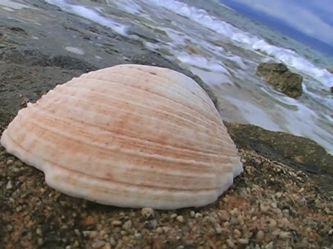 seashell - seashell stock videos & royalty-free footage