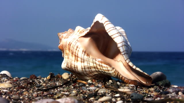 seashell (hd) - seashell stock videos & royalty-free footage