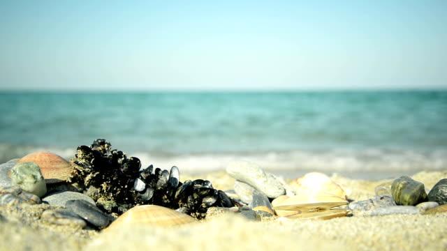 vídeos de stock e filmes b-roll de seashells e mar - concha do mar