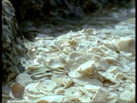 cu seashells in water, wave of clear water recedes leaving mass of white mollusc shells, australia - seashell stock videos and b-roll footage